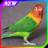 Tips Cara Merawat Burung Lovebird icon