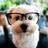 One Smart Puppy 1.0