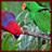 Lovebird Parrots Wallpaper App 1.0