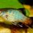 Cute Molly Fish Wallpaper! 1.0 APK