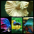 Betta fish Animations 85 1.0 APK