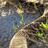 Diamondback Snakes Wallpaper! 1.0 APK