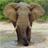 Elephant Gallery HD 1.3 APK
