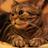 Cat Wallpaper 1.0 APK