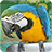 Bird Sounds 1.0.0 APK