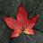 Autumn Live Wallpaper HD 1.1