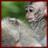 Macaque Monkeys Wallpaper App 1.0 APK