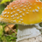 Amanita Mushrooms Wallpaper! icon