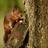 Baby Squirrels Wallpaper! 1.0 APK