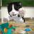 Cat Sim 2.3.11 APK