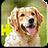Dogs Jigsaw Puzzles 2.0.3 APK