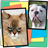 Cats Vs Dogs Action Memory icon