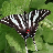 Zebra Swallowtail Butterfly 1.0 APK
